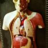 Organhandel ist Menschenhandel